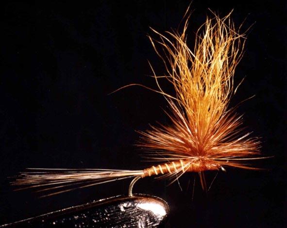 Rhitrogena Spinner