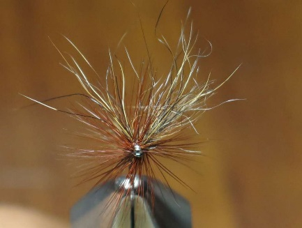 Marmotta Fly.