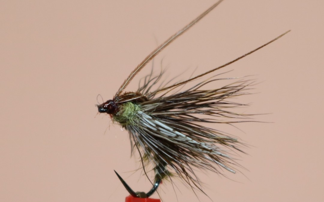 Caddis emergente di Davide Mc Phail